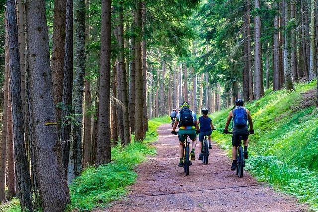 Lesní cesta na jízdních kolech