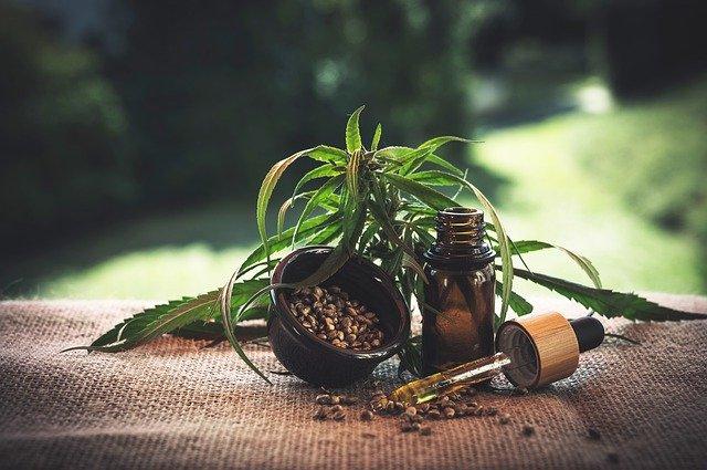 olej + rostlina + semínka