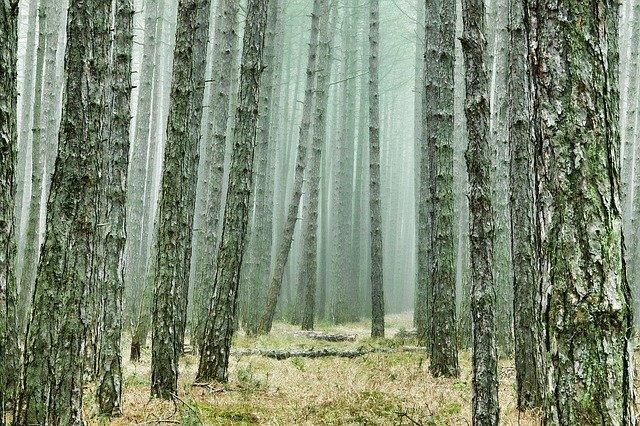 wood-3107139_640